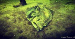 ryba na dnie jeziora